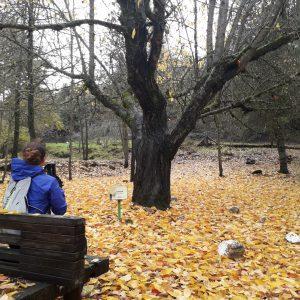 un Acer desnudo, otoño, arboretum, Sierra de Huetor